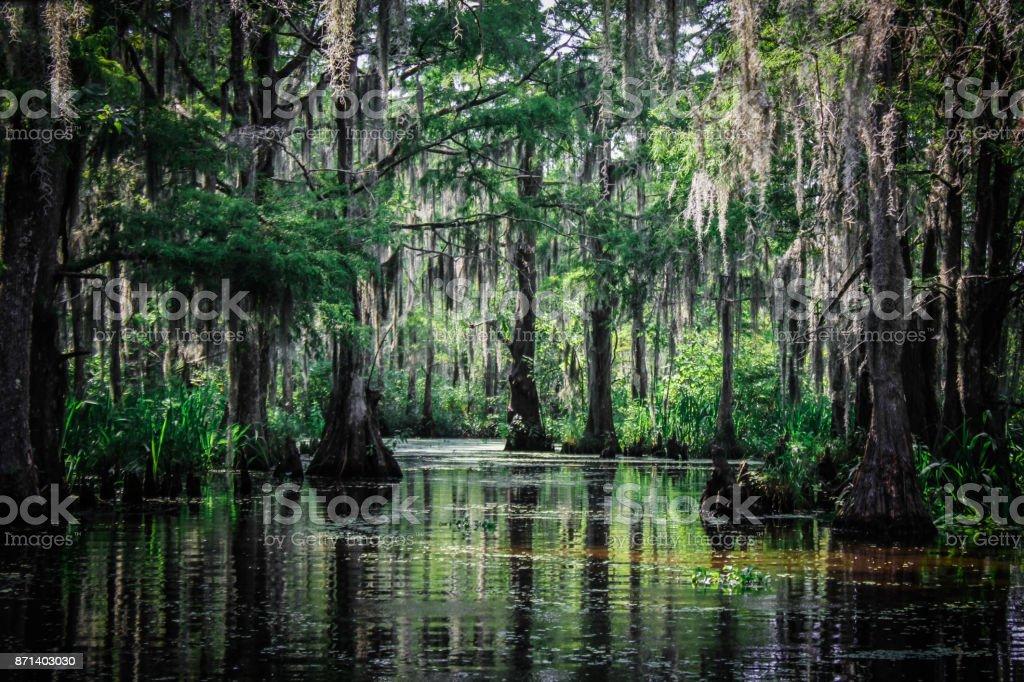 Trees of the Louisiana Swamp - Zbiór zdjęć royalty-free (Bagno)