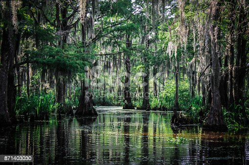 Bald Cypress Trees and other plant life native to the Louisiana Bayou.
