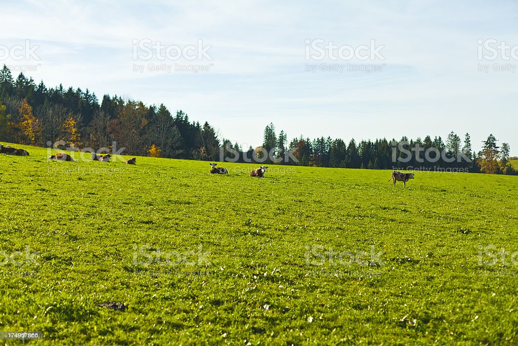 Trees on a field royalty-free stock photo