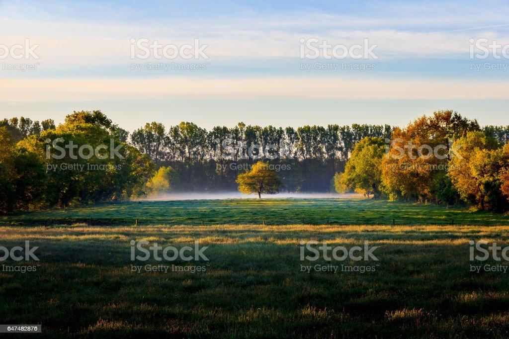 Trees on a meador near Wiesmoor stock photo
