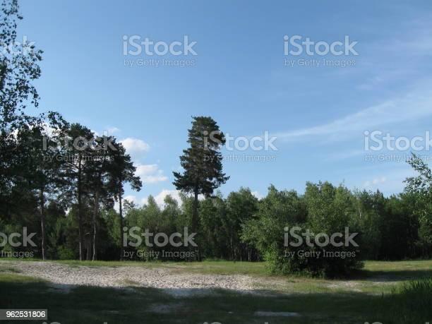 Foto de Árvores Em Uma Praia Arenosa e mais fotos de stock de Areia