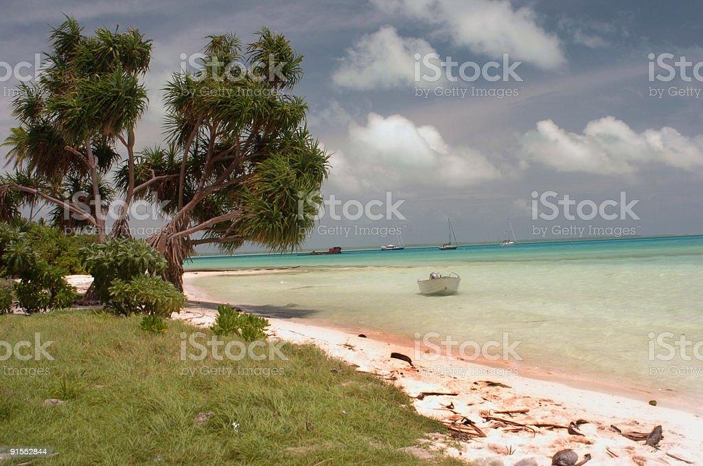 Trees on a tropical beach stock photo