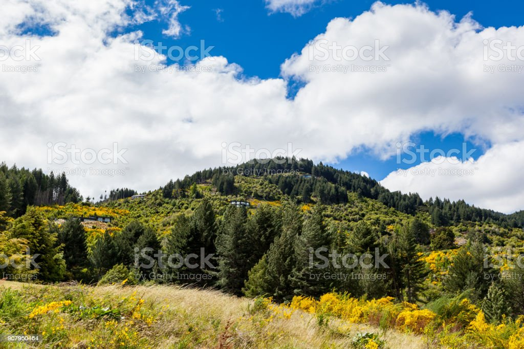 Trees on hilltop stock photo