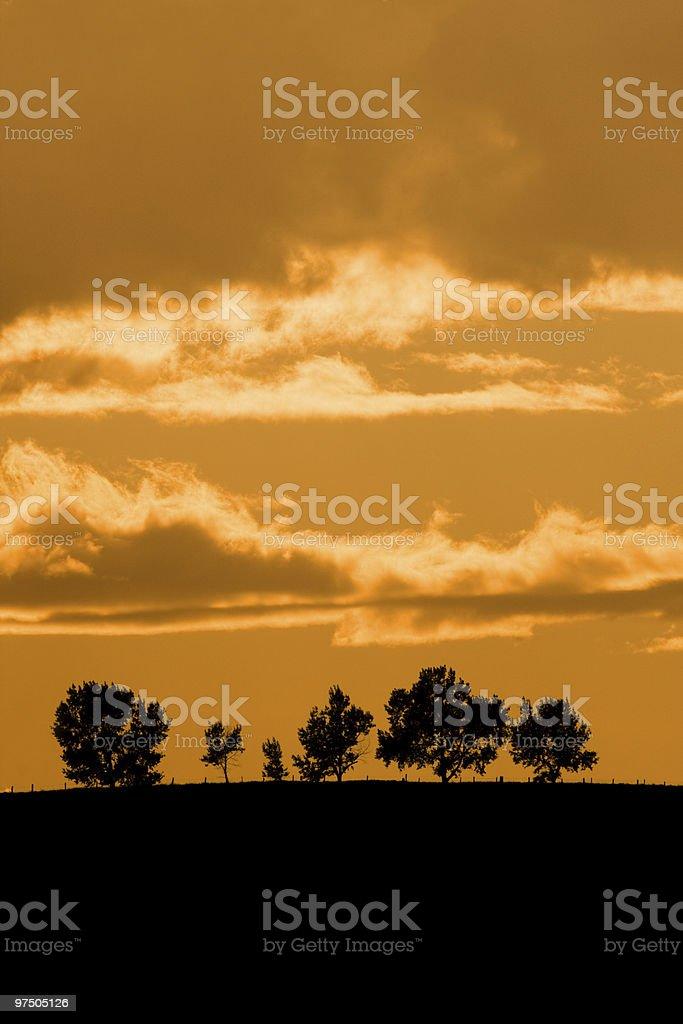 Trees on Horizon royalty-free stock photo