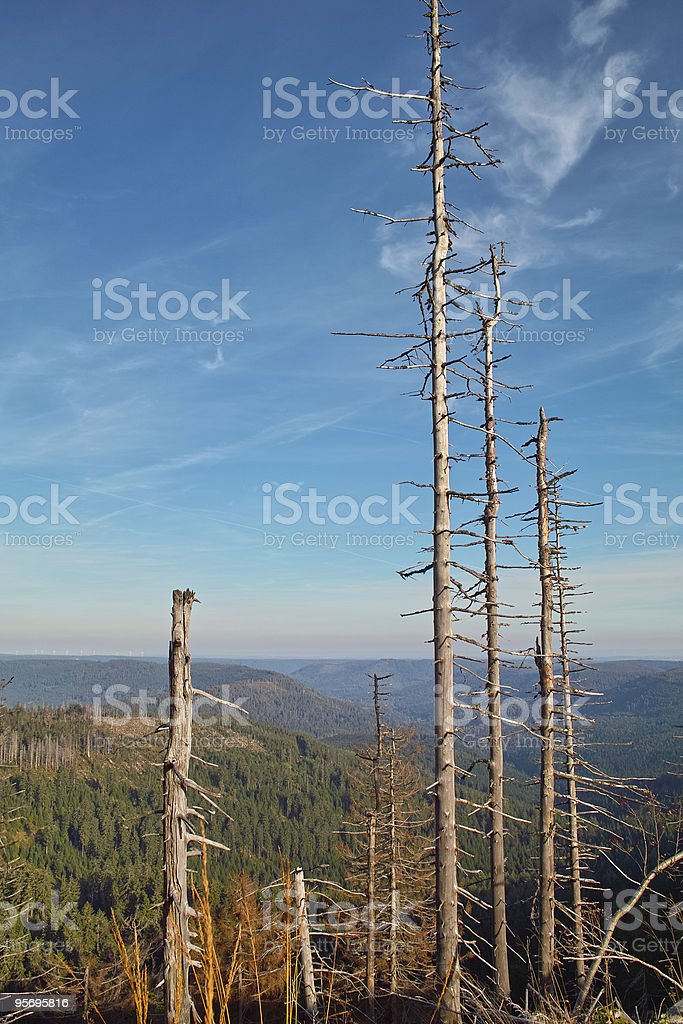 trees on Mont Hornisgrinde Black Forest stock photo