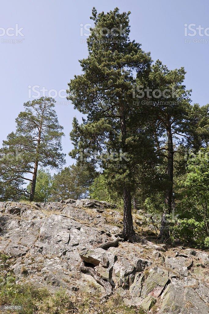 Bäume am rock Lizenzfreies stock-foto