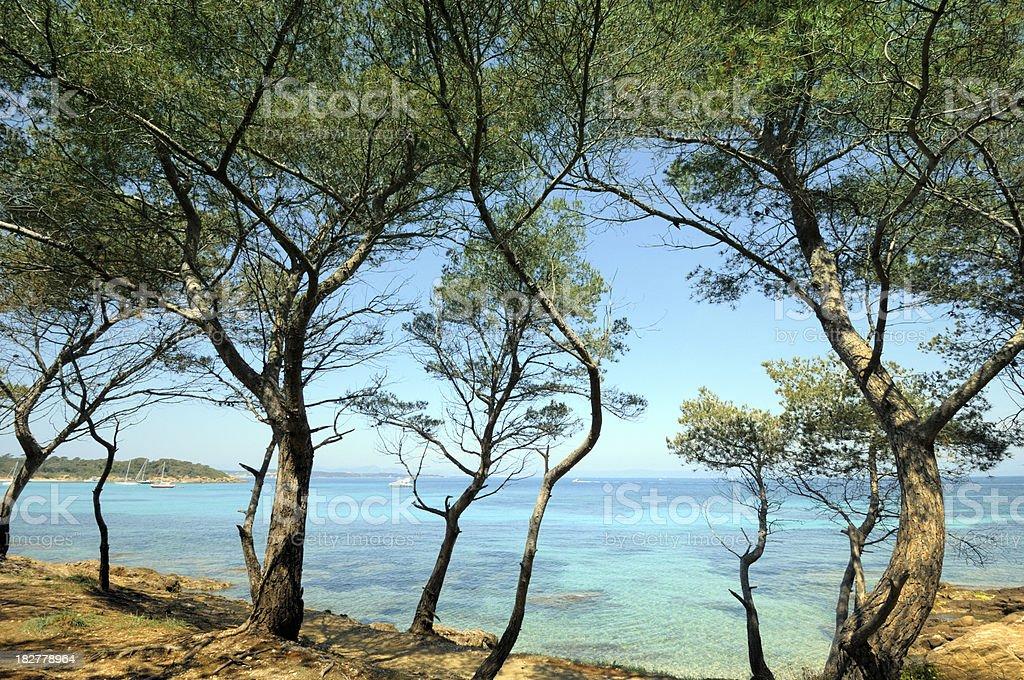 Trees on rocky shore stock photo