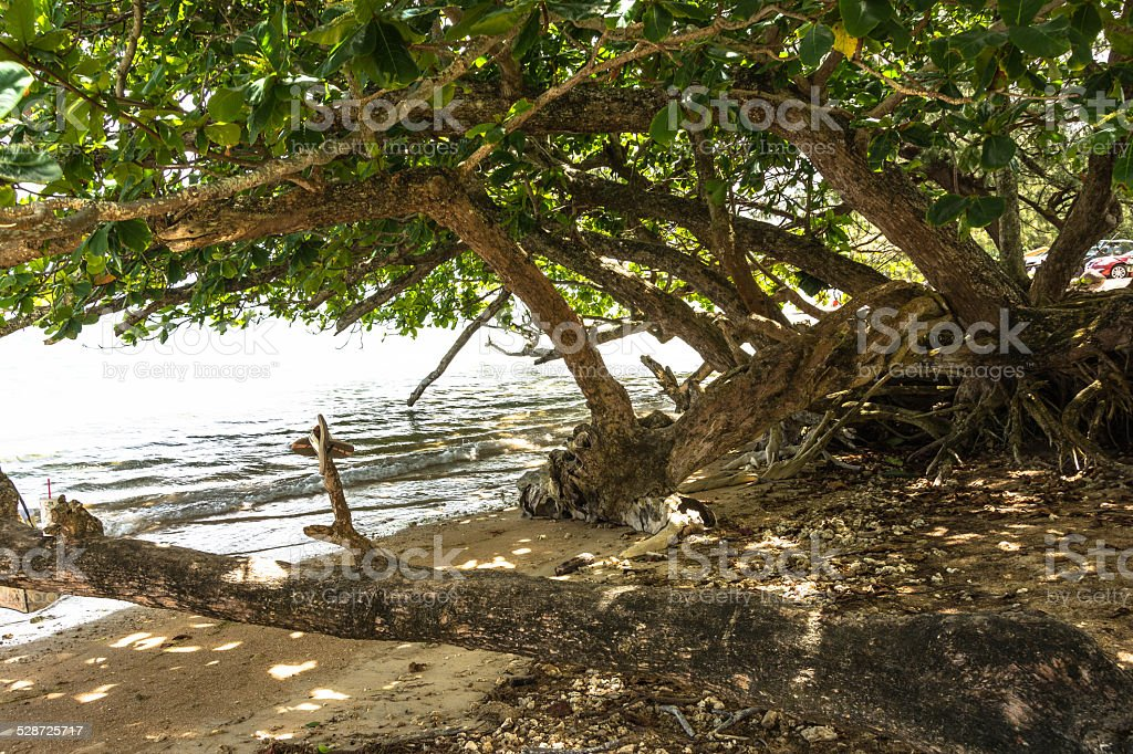 Trees on the beach in Kauai, Hawaii stock photo