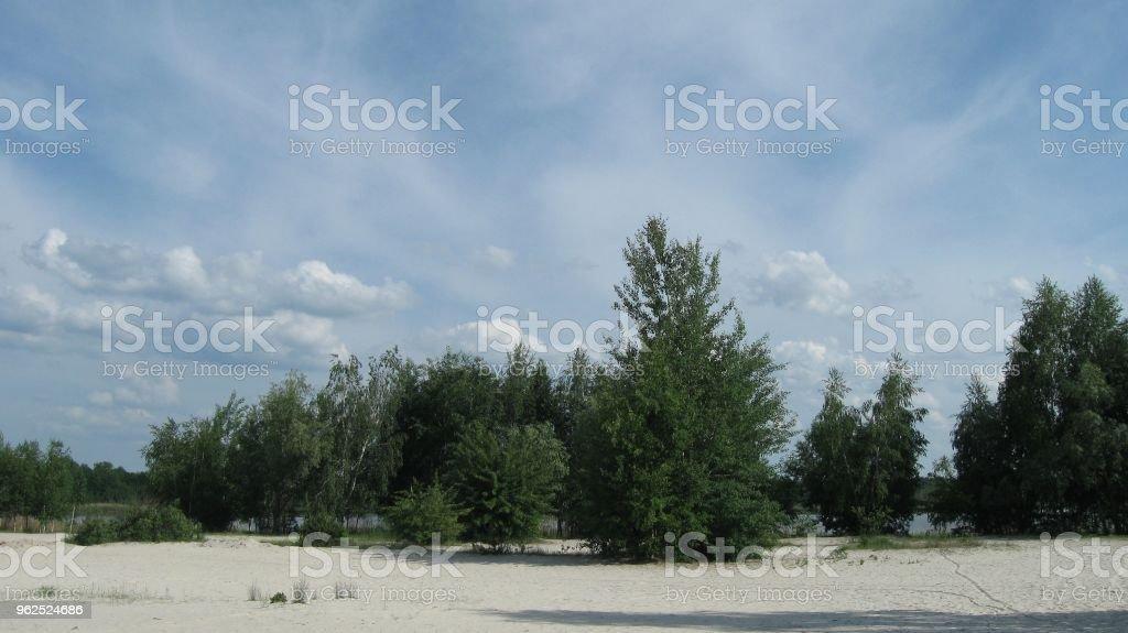 Árvores na praia - Foto de stock de Areia royalty-free