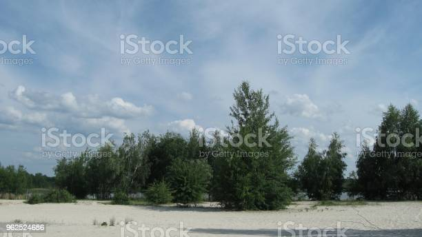 Foto de Árvores Na Praia e mais fotos de stock de Areia