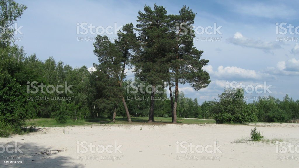 Trees on the Beach - Royalty-free Backgrounds Stock Photo