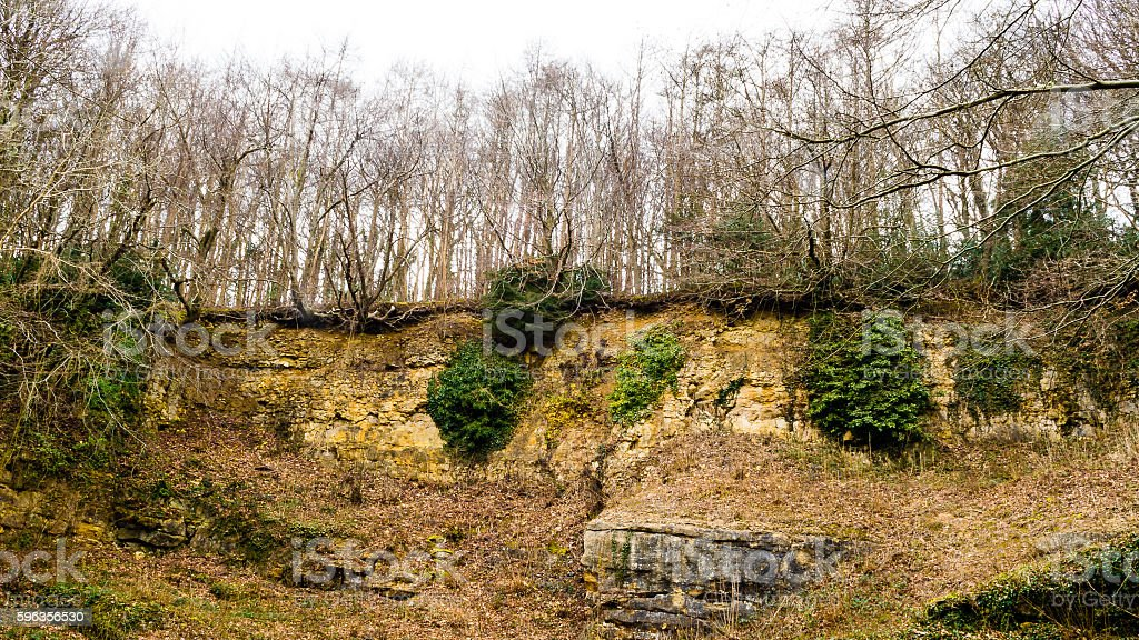 Trees on the cliff edge A royalty-free stock photo
