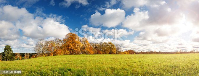 trees with multicolored leaves on the field