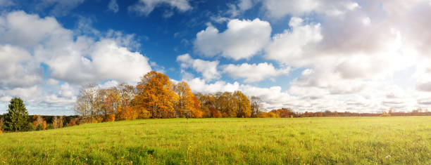 trees on the field in autumn on beautiful sunny day - september stock photos and pictures