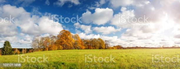 Photo of trees on the field in autumn on beautiful sunny day