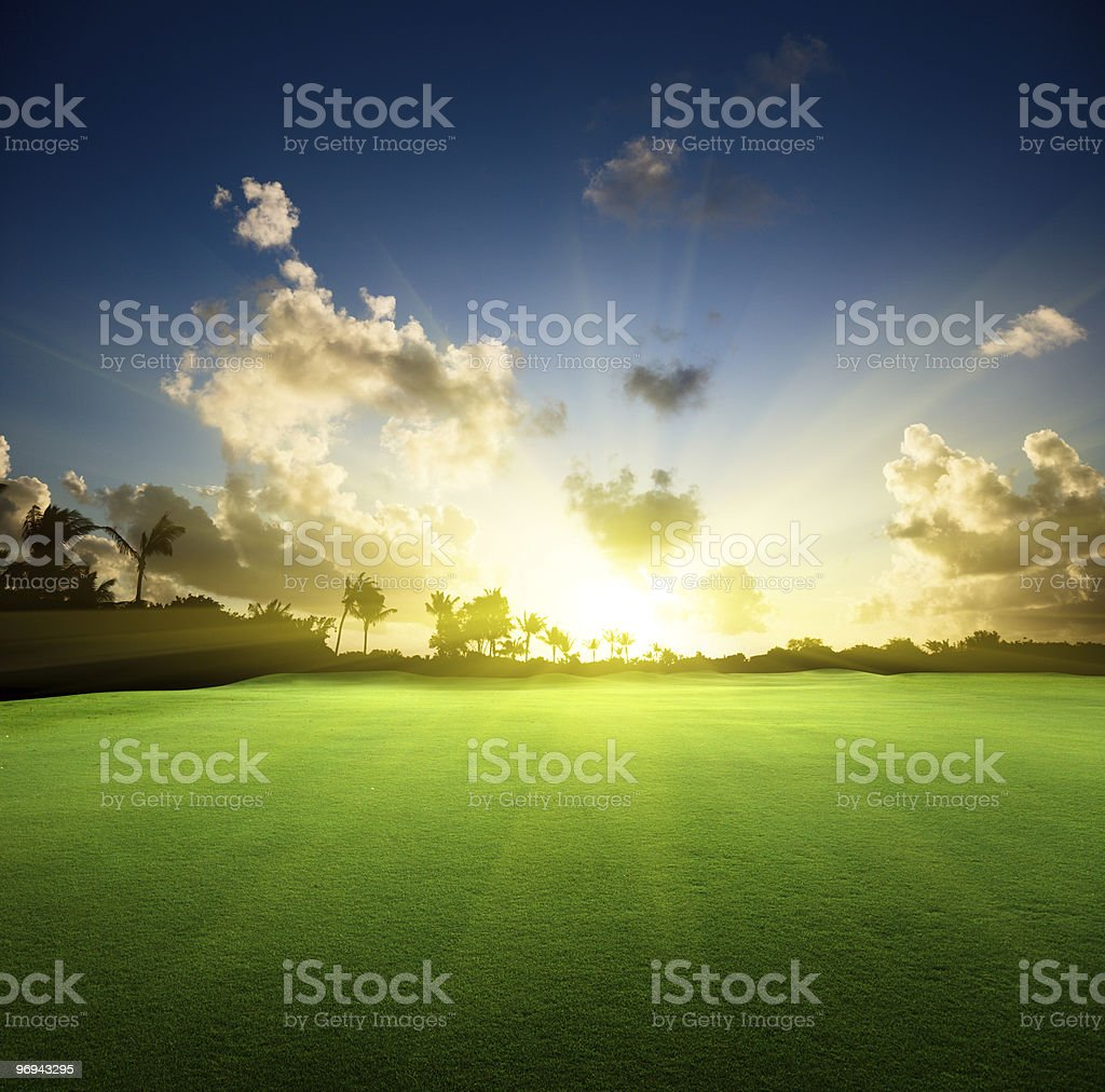 trees on the field of grass and sunset royalty-free stock photo