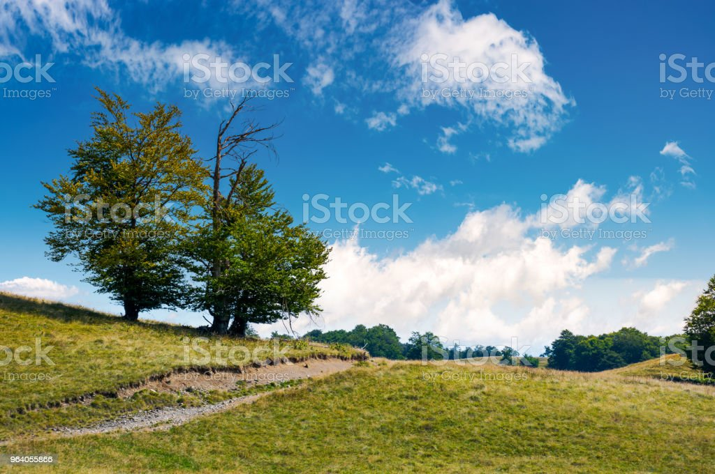 trees on the grassy alpine meadow of Carpathians - Royalty-free At The Edge Of Stock Photo