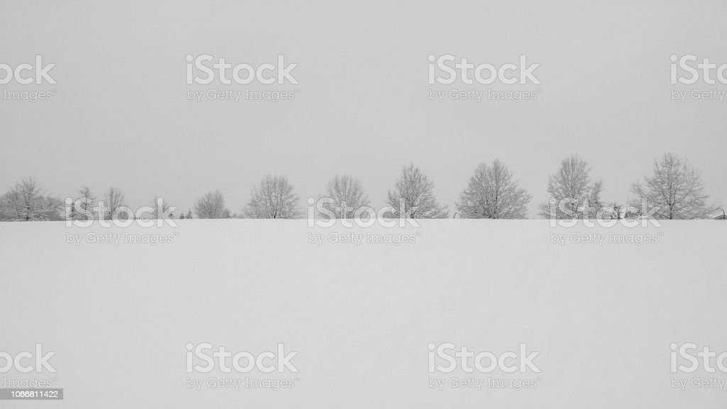 Trees on the hill - covered by snow stock photo
