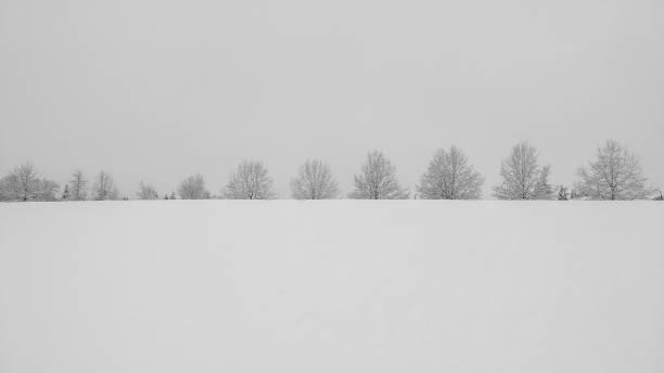 Arbres sur la colline - recouvert de neige - Photo