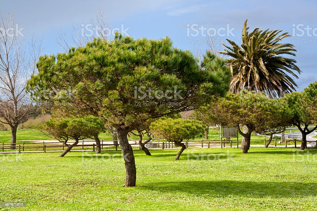 Trees on the park stock photo