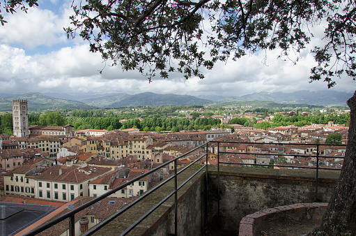 istock Trees on the roof of the Torre Guinigi 693673234
