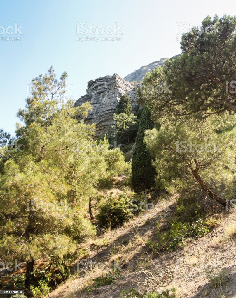 Trees on the slope. royalty-free stock photo