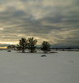 istock Trees on the snowy oceanshore 537346889