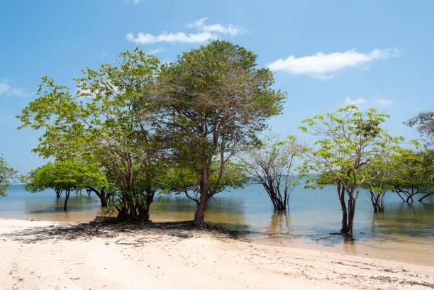 Trees on the Tapajós River, in the Alter do Chão region stock photo
