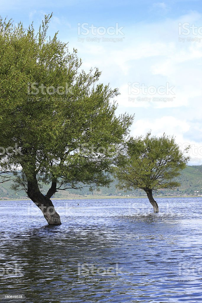 Trees on Water royalty-free stock photo