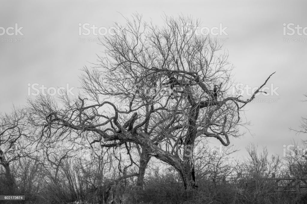 Trees outside Austin, Texas stock photo