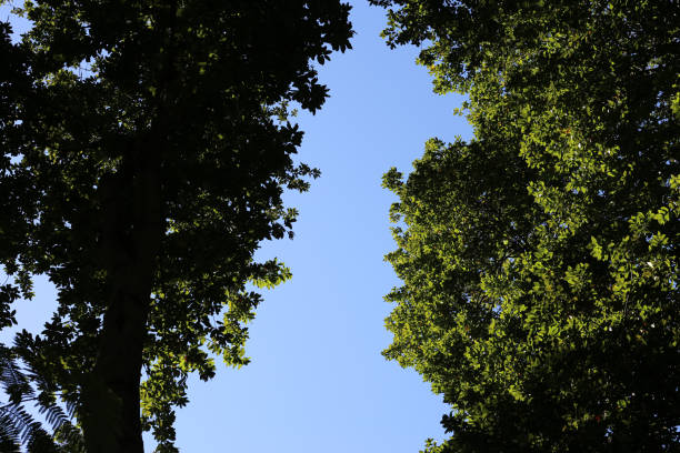 Trees Photographed from Below in the Idyllic Island of Madeira, Portugal stock photo