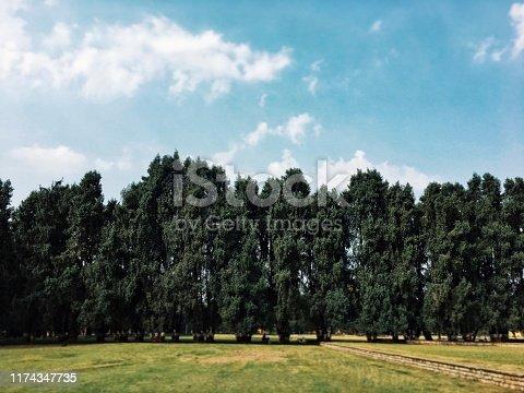 istock Trees 1174347735