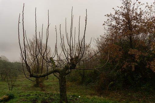 Spectacular images of various species of trees typical of the Italian territory