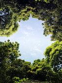 istock trees 177034402