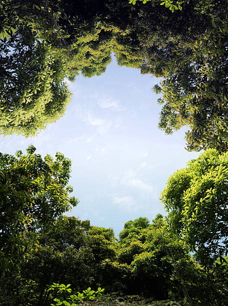 trees The trees are very lush. flourish art stock pictures, royalty-free photos & images
