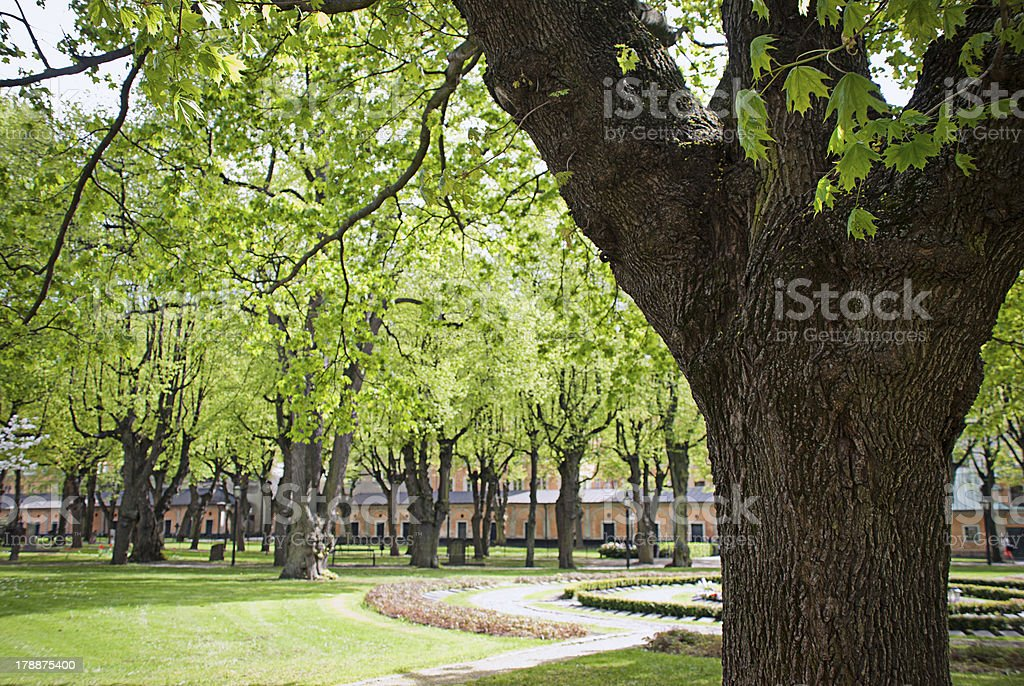 Bäume – Foto