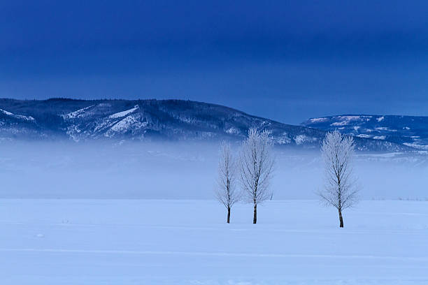 3 Trees 3 frost covered trees in cold winter morning ground fog steamboat springs stock pictures, royalty-free photos & images
