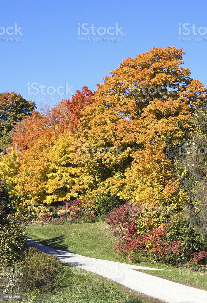 나무 royalty-free 스톡 사진