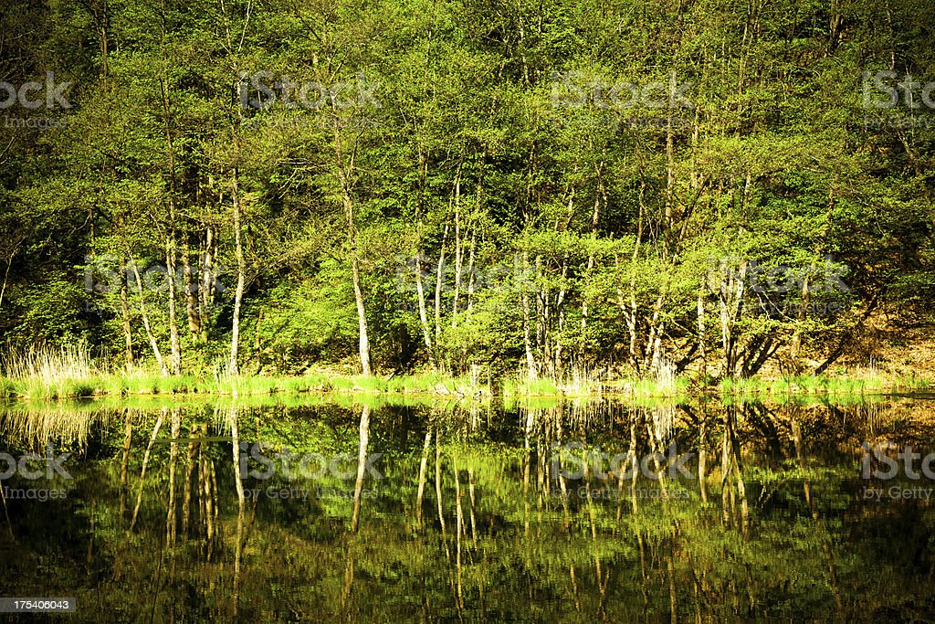 Trees Reflceted on Lake royalty-free stock photo