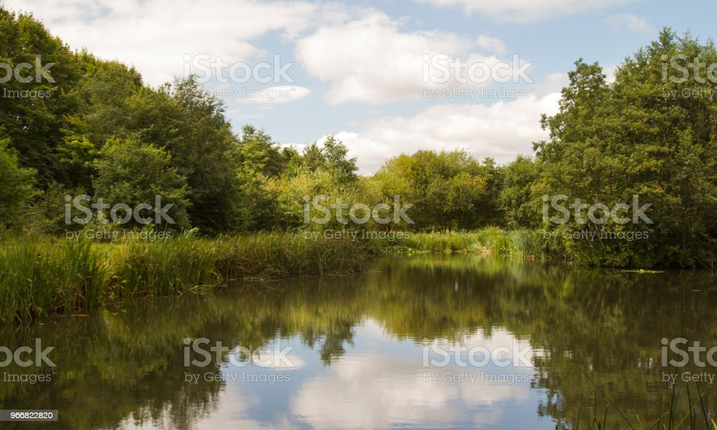 Trees reflected in a lake in summer stock photo