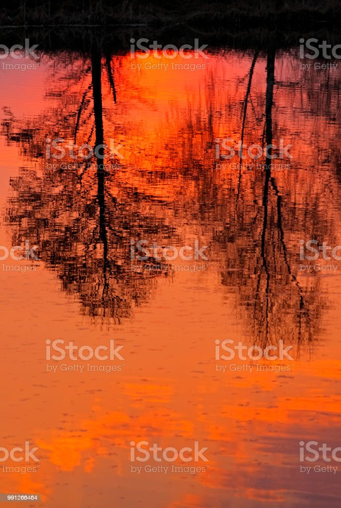 Trees reflected in lake surface stock photo