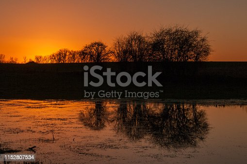 istock Trees reflected in the Golden Light of Sunset 1152807534
