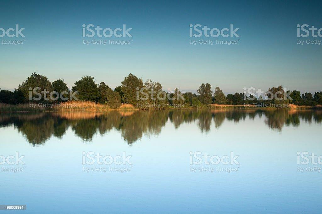 Trees reflected stock photo