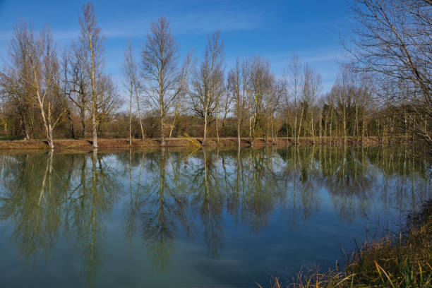 Trees reflecting in a lake in mid-winter stock photo