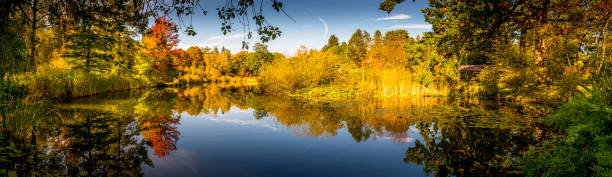 trees reflecting in a lake stock photo