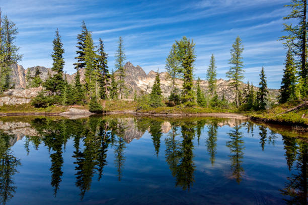 Trees reflecting in a pond near Blue Lake, Winthrop, WA on a sunny day Trees reflecting in a pond near Blue Lake, Winthrop, WA on a sunny day cutthroat stock pictures, royalty-free photos & images