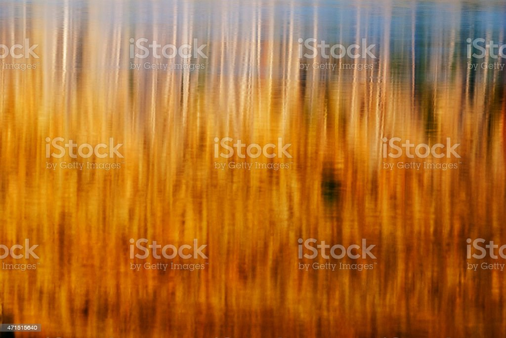 Trees reflecting in Little Redfish Lake Stanley Idaho stock photo