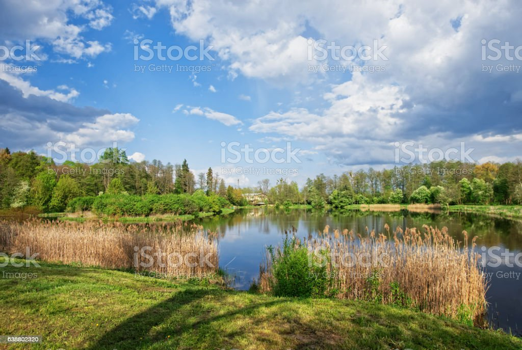Trees reflecting in pond at Bialowieza National Park in Poland stock photo
