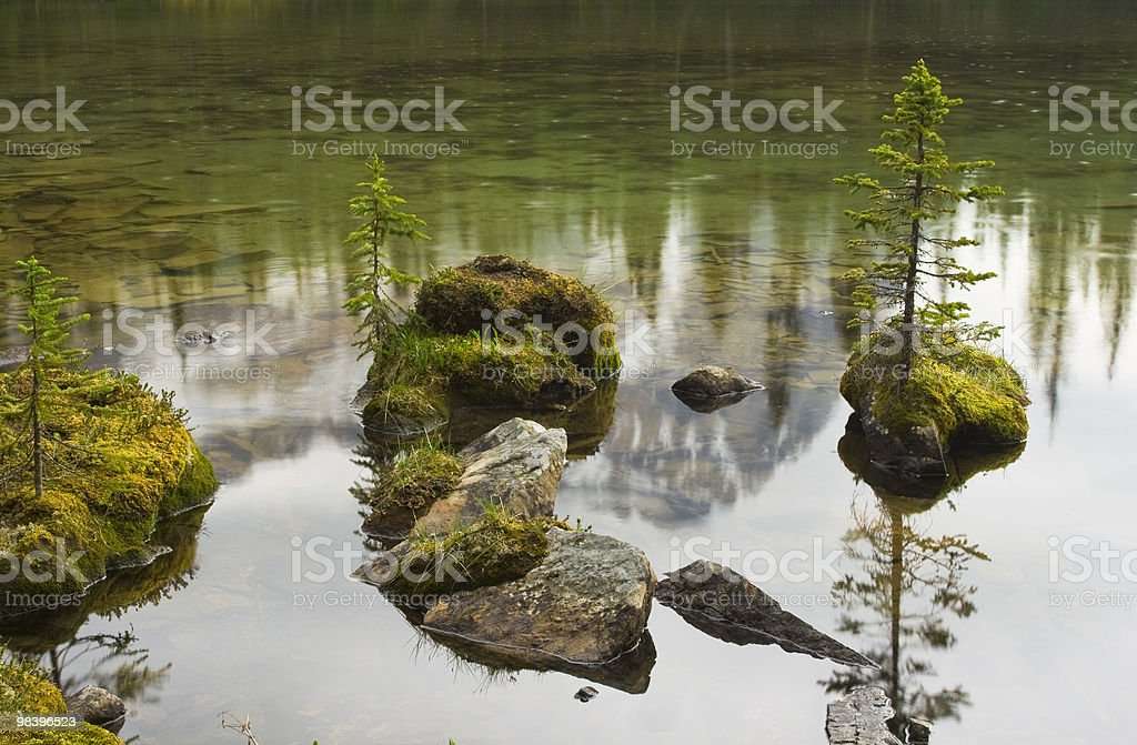 Trees Reflecting In Pond royalty-free stock photo
