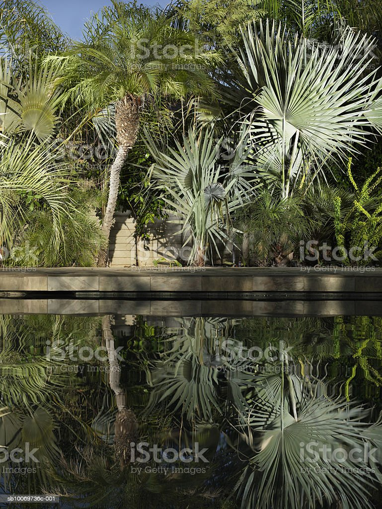 Trees reflecting in swimming pool royalty-free stock photo